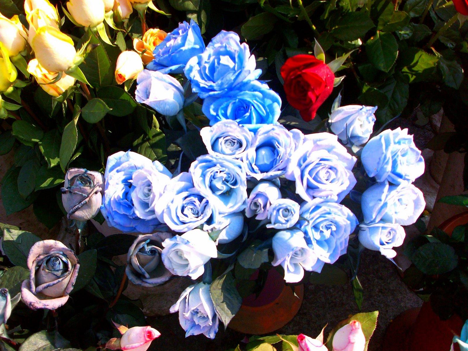 Rosas Azules Taringa Flores Con Brillo Imagenes Para