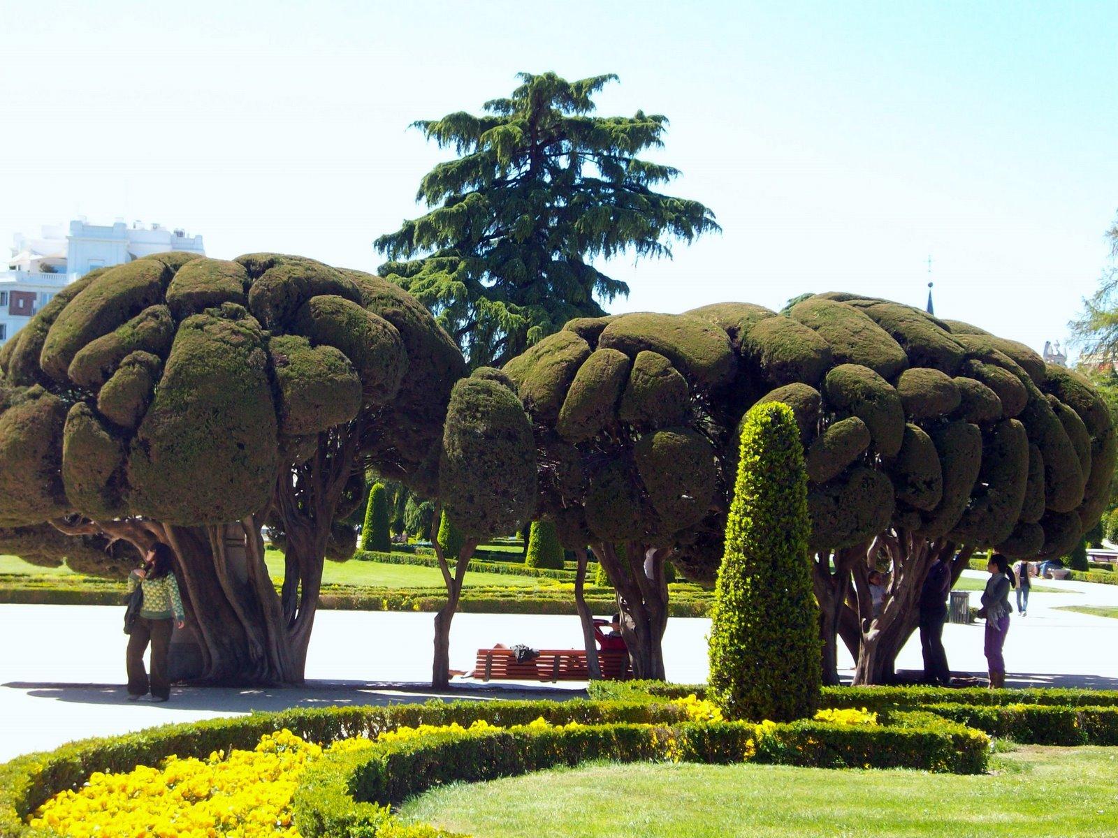 Madrid arboles curiosas formas mis viajes por ah mis for Arboles de jardin fotos