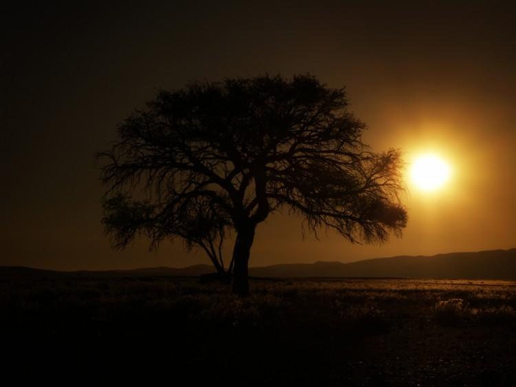 acacias sossusvlei