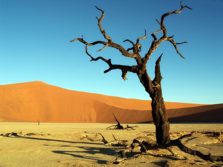 Acacias quemadas en el Deadvlei