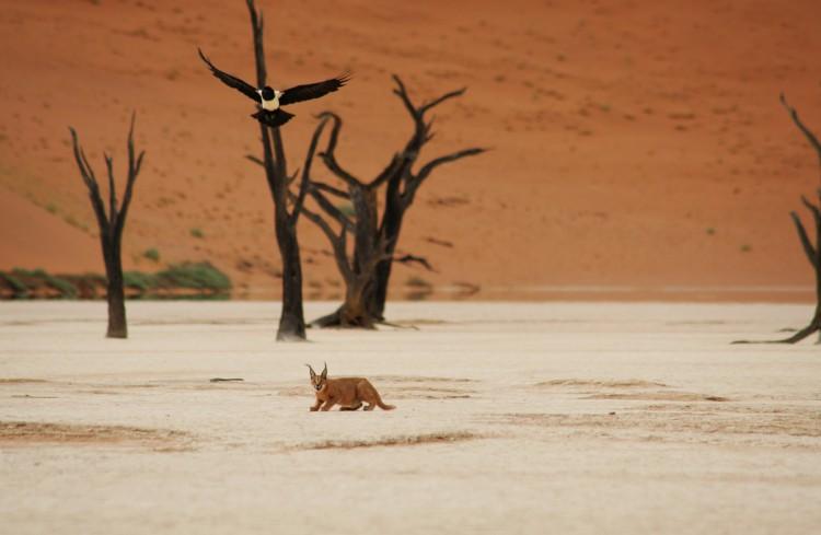 fauna namibia