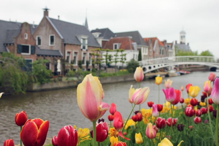 Canal-de-Dokkum-y-sus-típicos-tulipanes