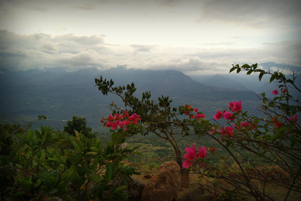 rosas-de-Colombia