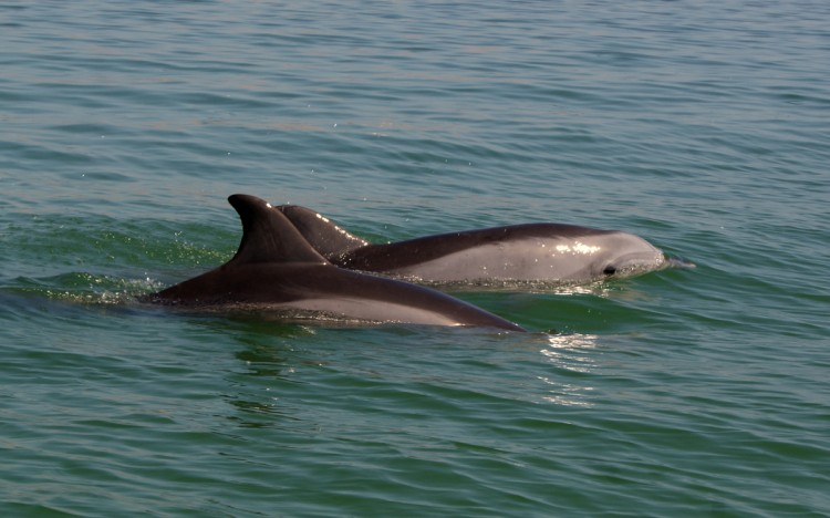 delfines de perú