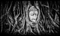 Buddha entre raíces