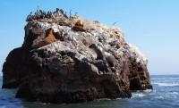 Paracas y las Islas Ballestas II, PERÚ