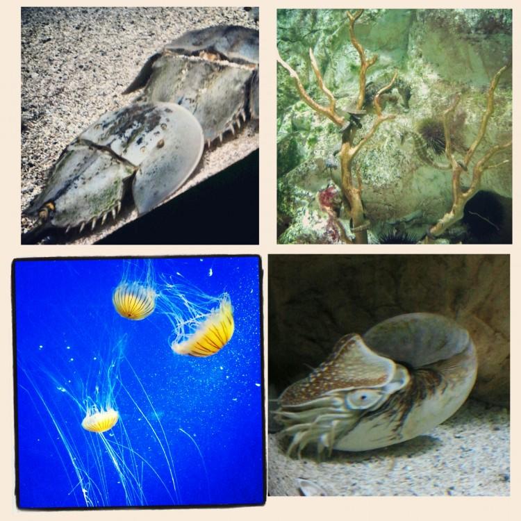 acuario de La Rochelle