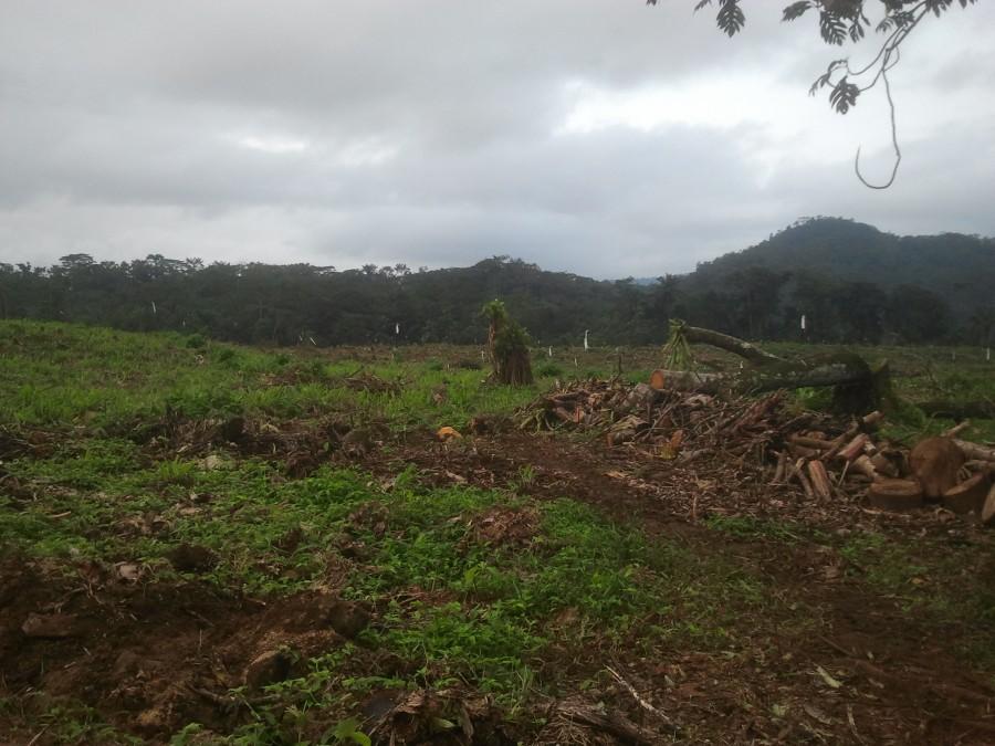 deforestación en Santo Tomé y Príncipe por Agripalma