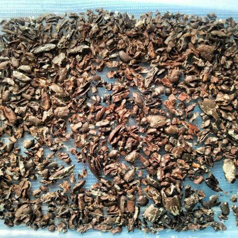 pepitas de cacao
