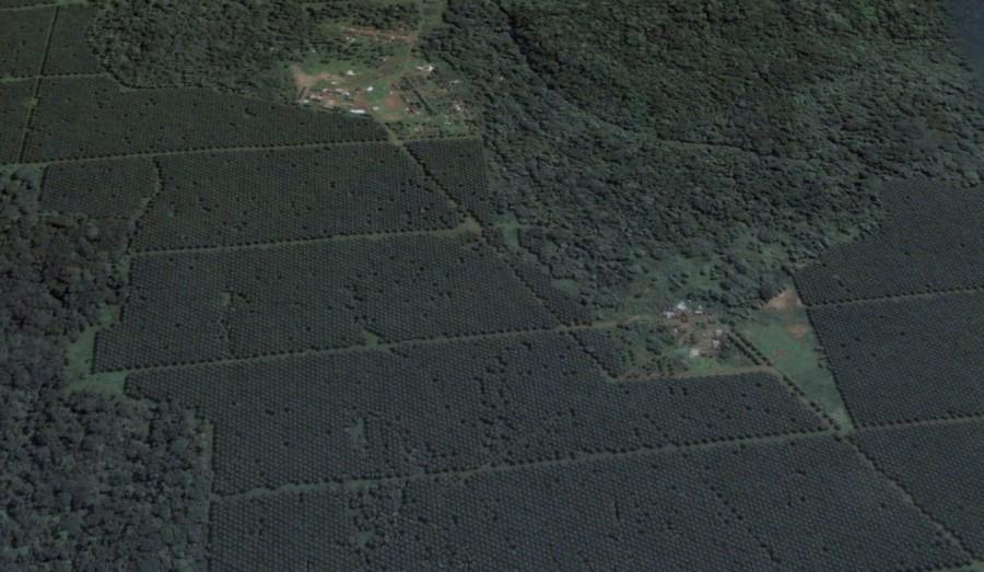 deforestación de santo tome y principe