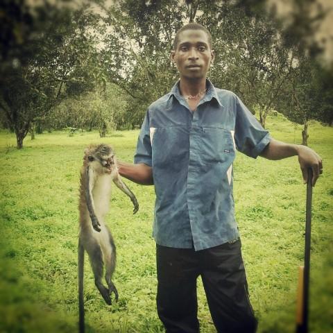 cazador de monos