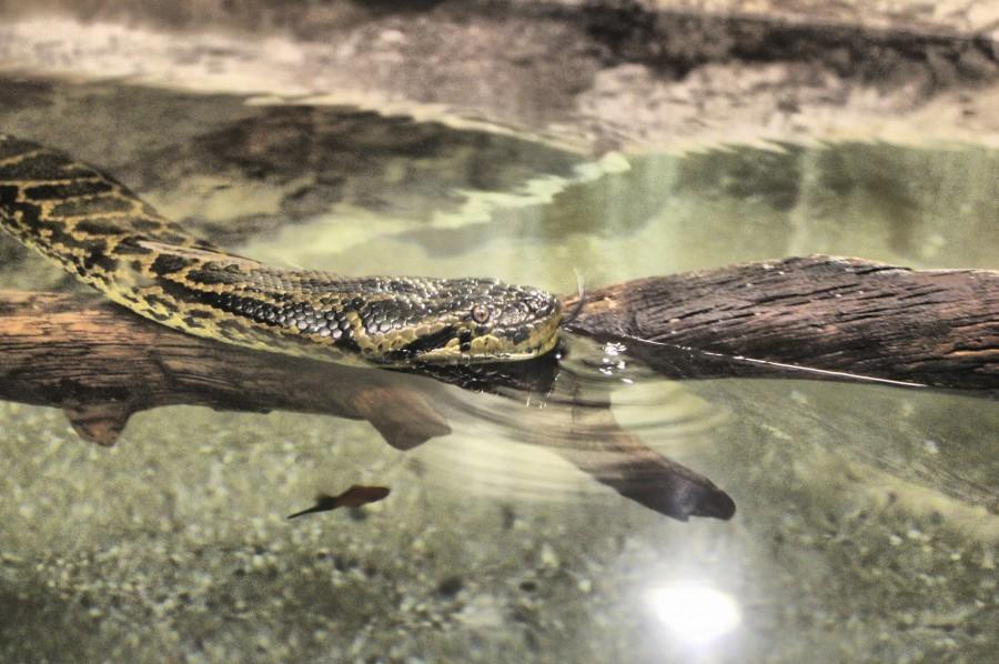 Anaconda del Acuario Fluvial