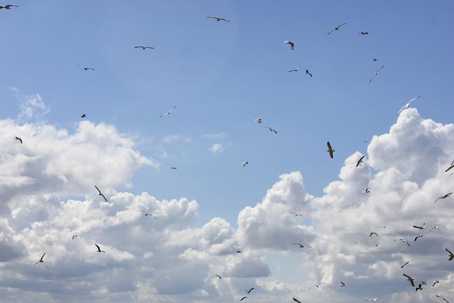 banco de gaviotas de la isla de Schiermonnikoog