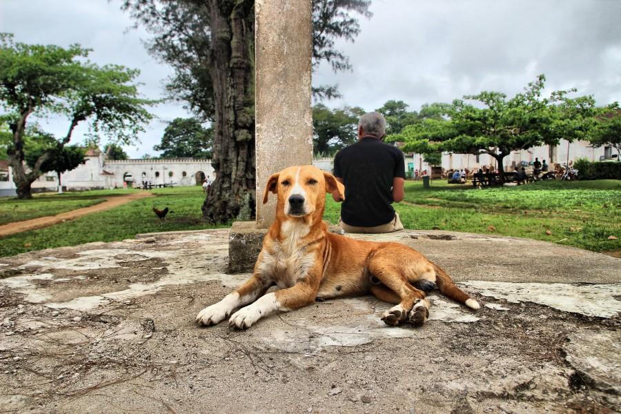 perro de sundy