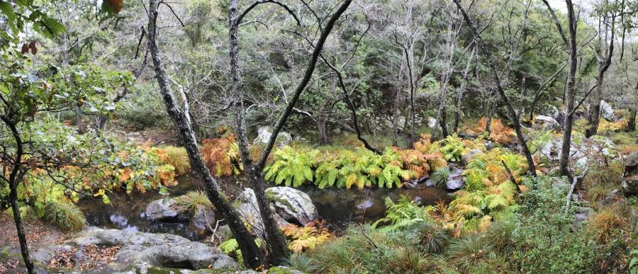 parque natural alcornocales