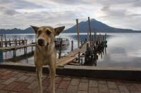 GUATEMALA 2: Ascenso al volcán San Pedro (VÍDEO)