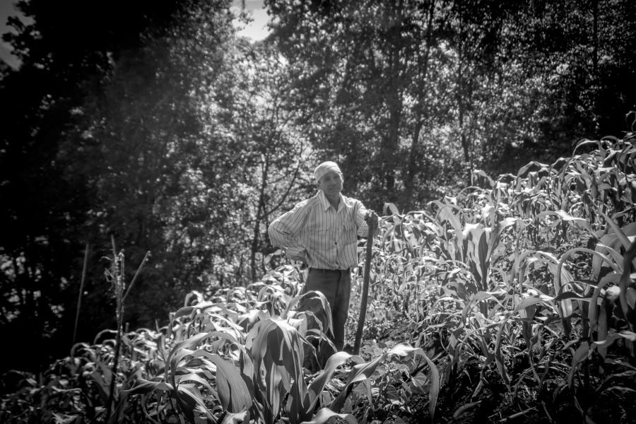 Campesino de maíz, sólo habla idioma tzutujil