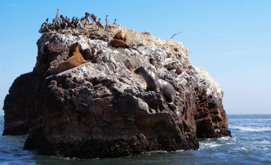 Leones y pingüinos en las Islas Ballestas