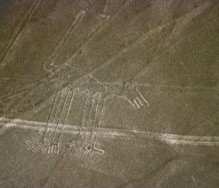 Un perro en las líneas de Nazca