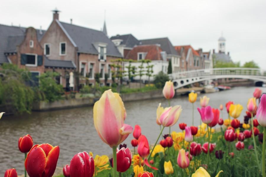 Canal de Dokkum y sus típicos tulipanes