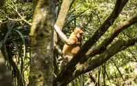 Borneo: El Parque Nacional de Bako