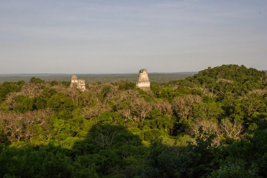 Selva del Petén desde el templo IV