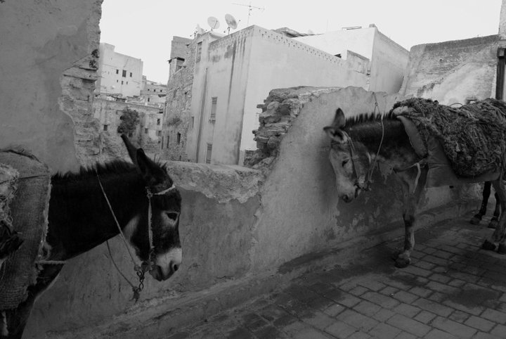 burros fez