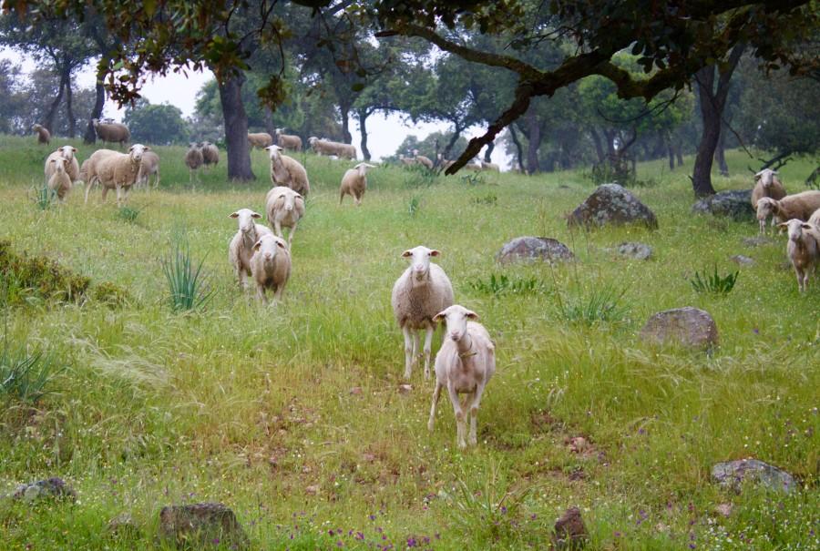 Fauna de Sierra Morena
