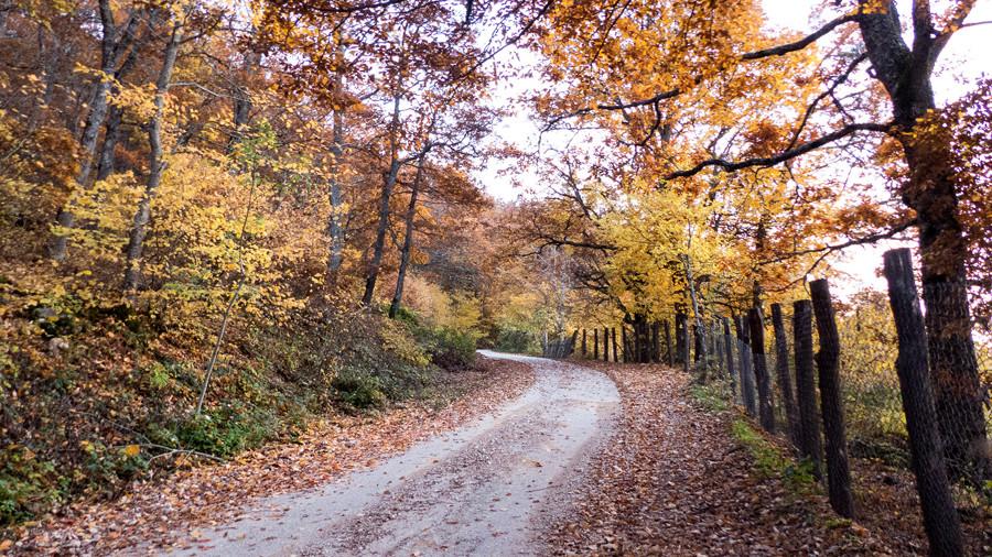 carretera otoño
