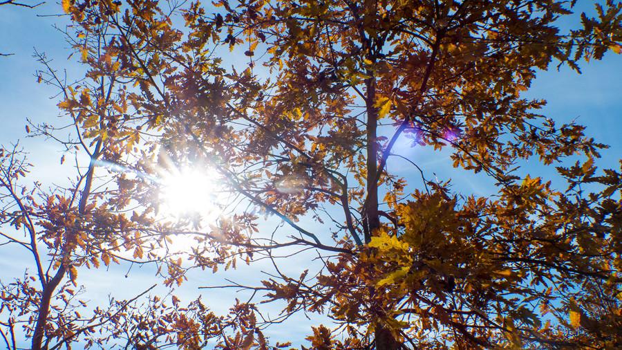 luz entre las ramas