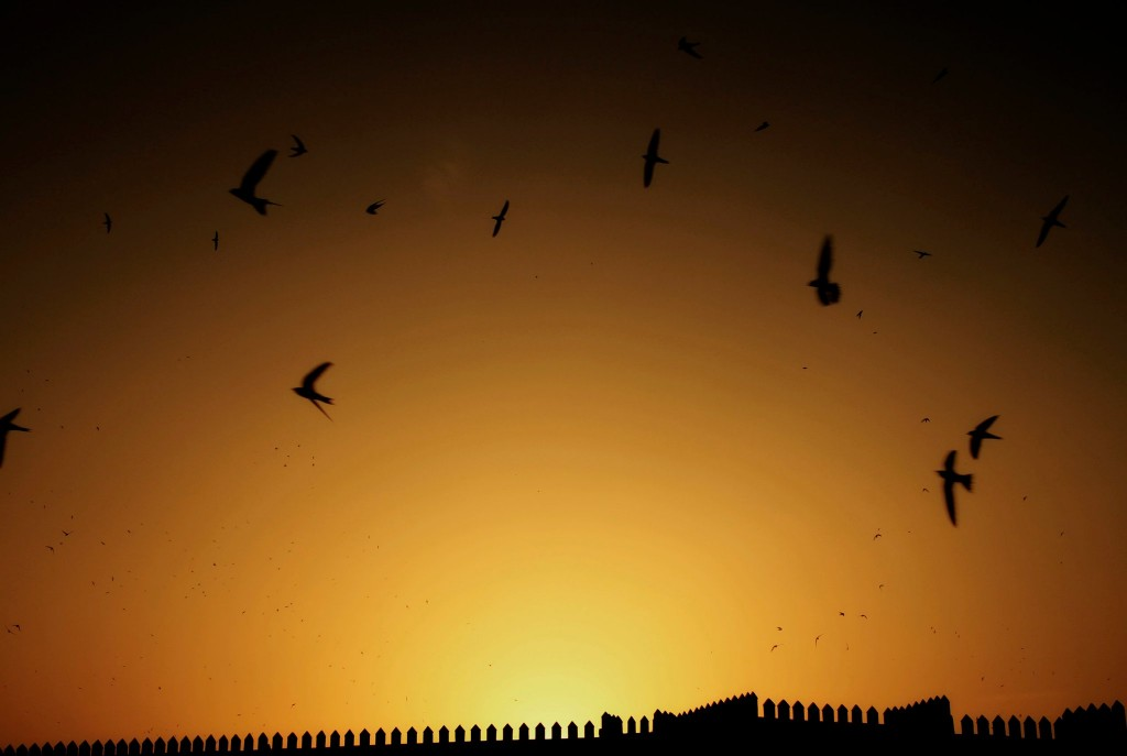 "as dawn falls over Fes, thousands of woodswallows fly over the ""place floklorique et loisirs boujloud"""