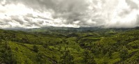 Munnar_Teafields_green_lust_low